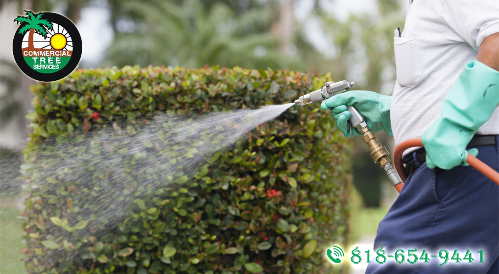 You Need Commercial Tree Service in Calabasas