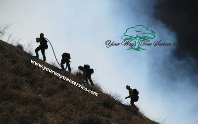 your-way-tree-service-brush-fire-los-angeles