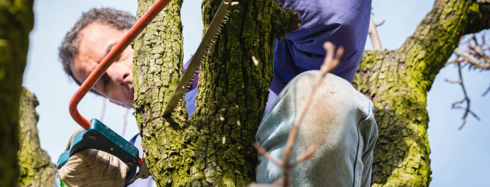Tree Trimming Service in Brentwood