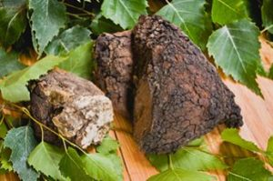 Herbal Therapy through Sayan Chaga