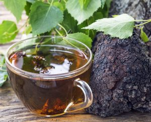 The Chaga Mushroom Benefits You Need in Your Life